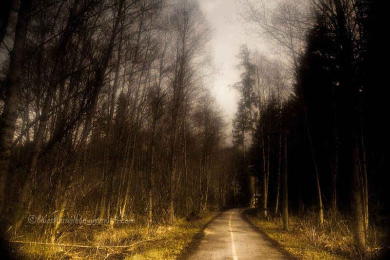 A forest path through Whistler Canada