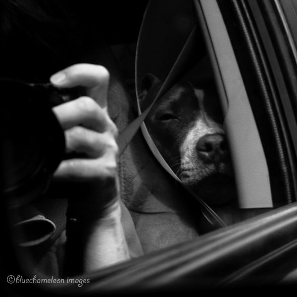 A self portrait in a side mirror in car with a dog
