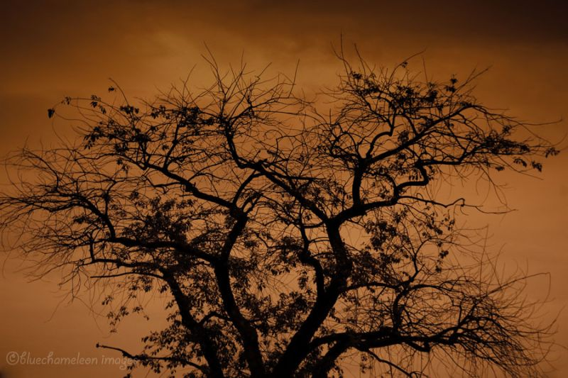 A silhouette of a bare tree against orange sky