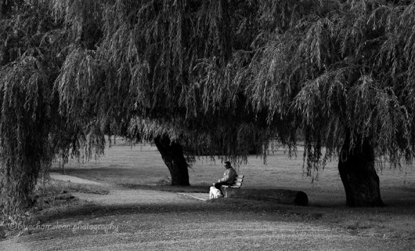 A man and dog on bench under larg weeping willow