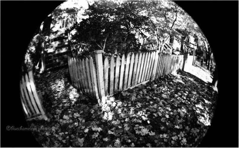 Fisheye view of a white fence, fallen leaves