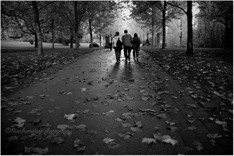 A group of people walking along path of leaves