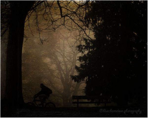 A man riding bike through fog past trees, bench
