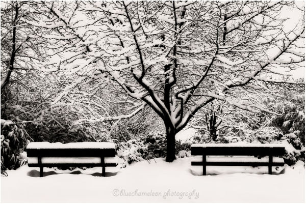 Two benches in snow with big tree in centre