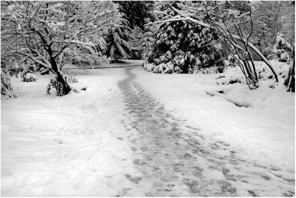 A winding snow covered path with footprints