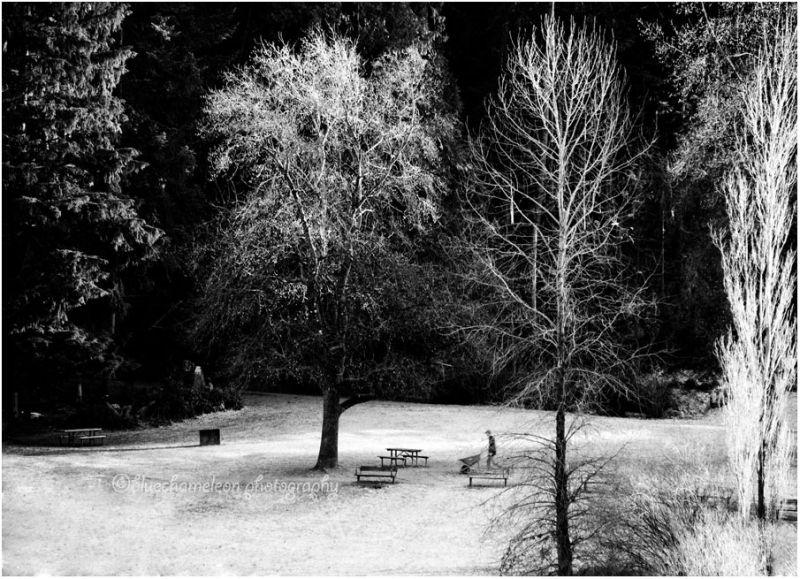 Man with wheelbarrow on frosty grass, trees