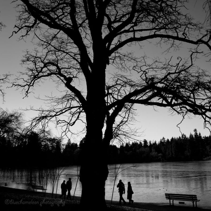 2 couples passing by a tree in silhouette