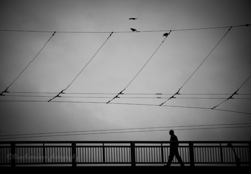 A silhouetted man walking cross bridge with ravens