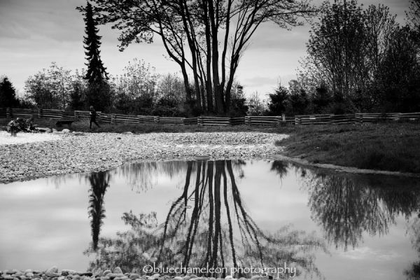 Reflection of trees in pond at UBC