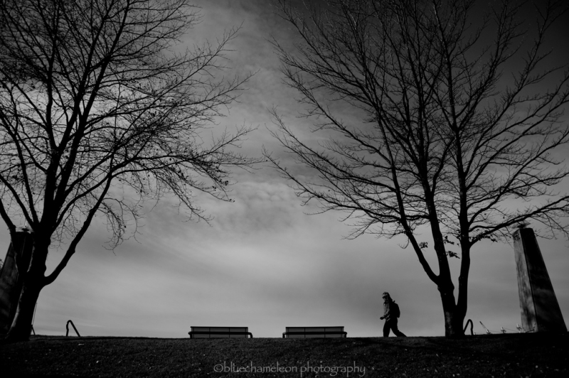 Silhouetted man walking through trees, park bench
