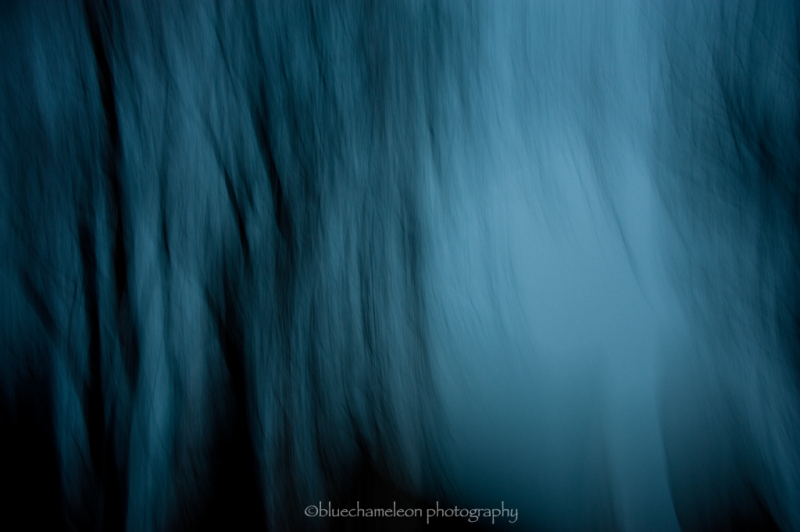 Blurred trees in a winter sky