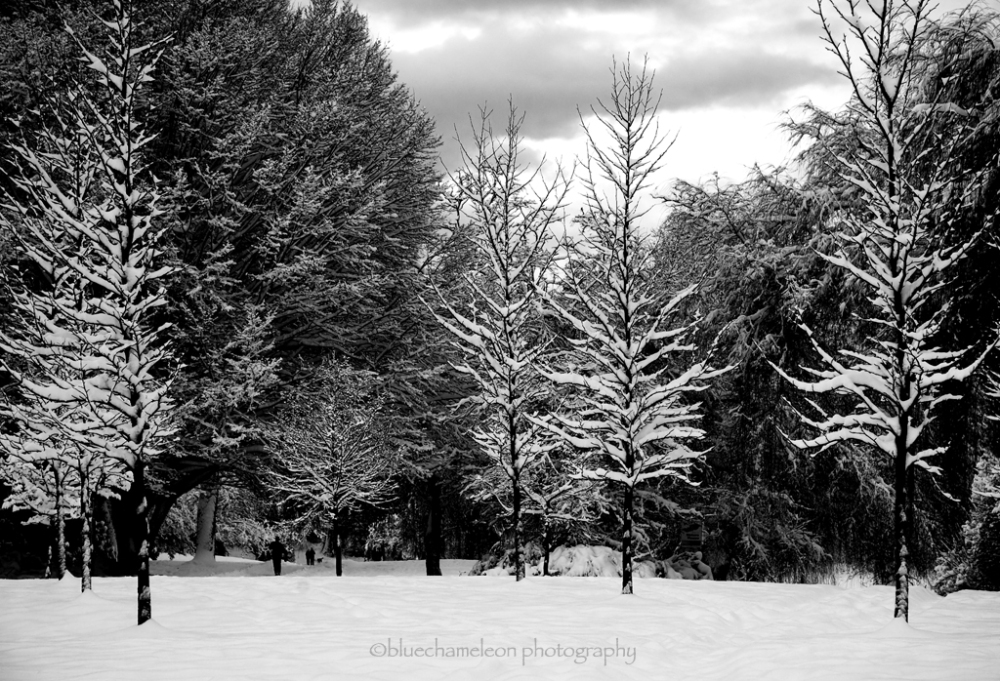 Snow covered trees on a winters day