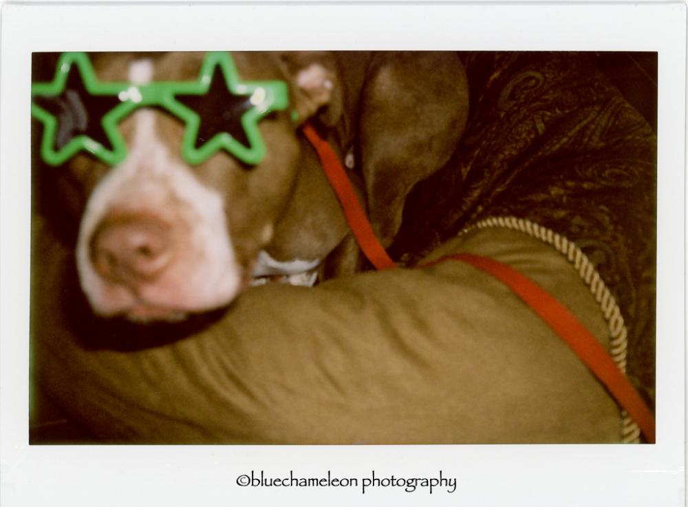 a dog wearing star shaped sunglasses
