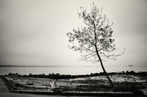 Lone leaning trees on beach in mist