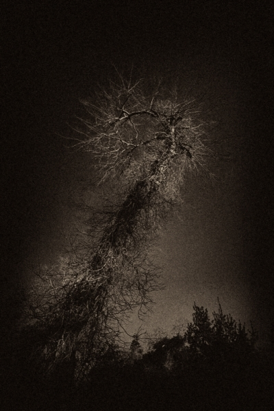 The Ancient Tree