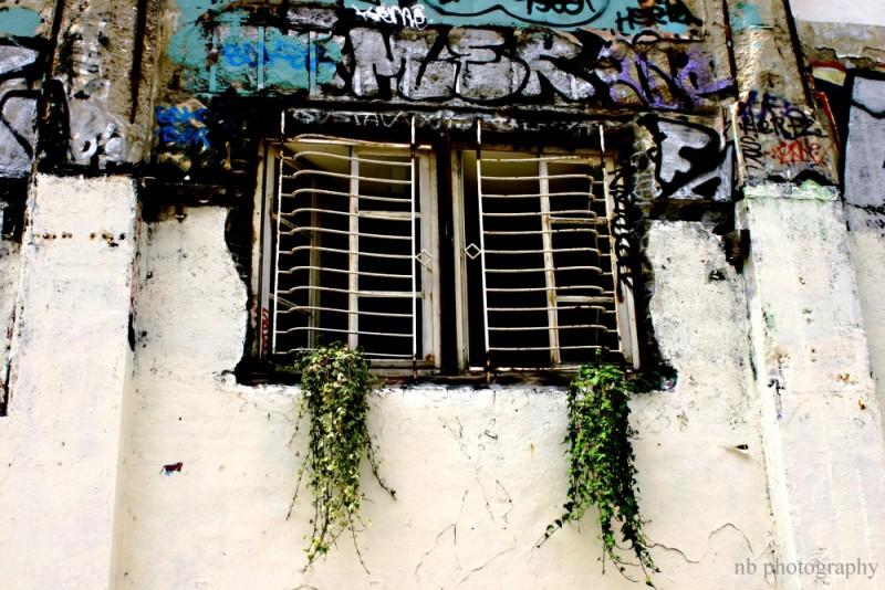 Une fenêtre garnis des frigos