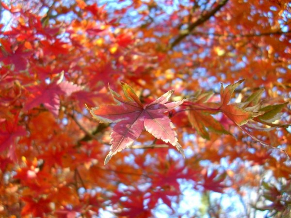 A tree during autumn.