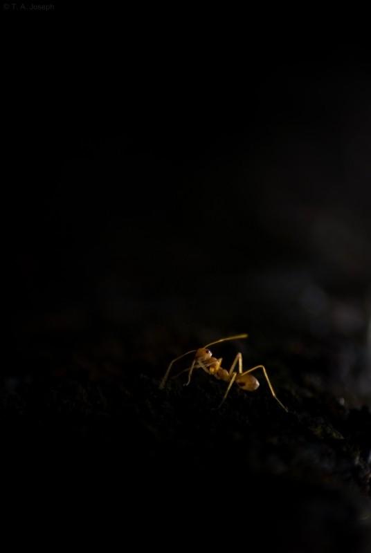 A Spot meterd shot of an ant