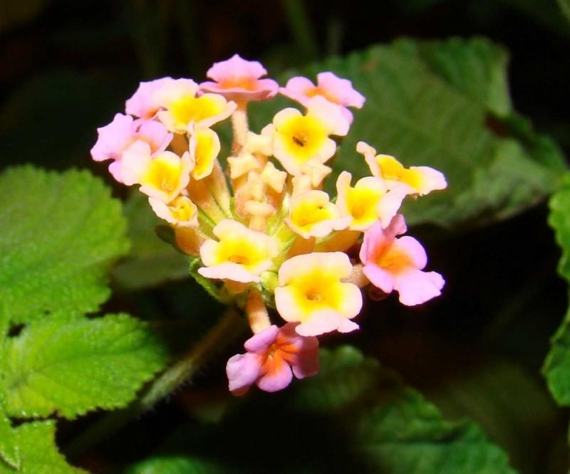 ranbow flowers