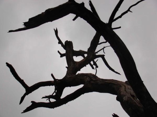 way towards the sky wood thorns