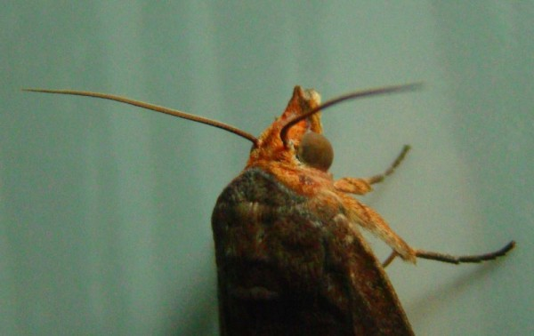 insect extreme closeup exotic