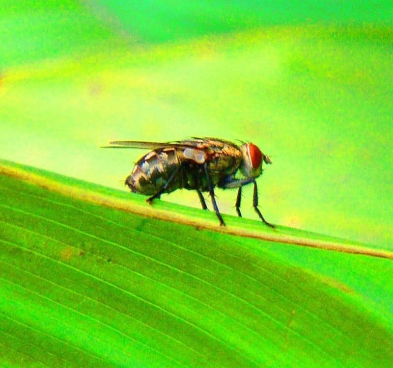 fly on a leaf drone eyes