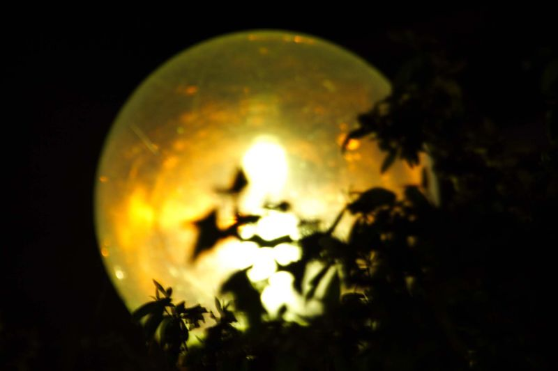 pseudo moon lamp florecent leaves