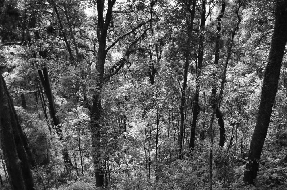 The dark woods...