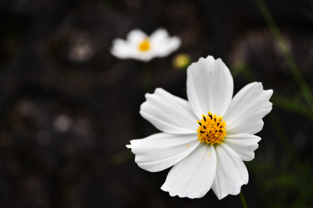 Flower in the rock garden 2