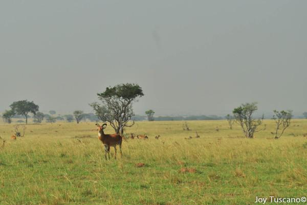 African Savana 2