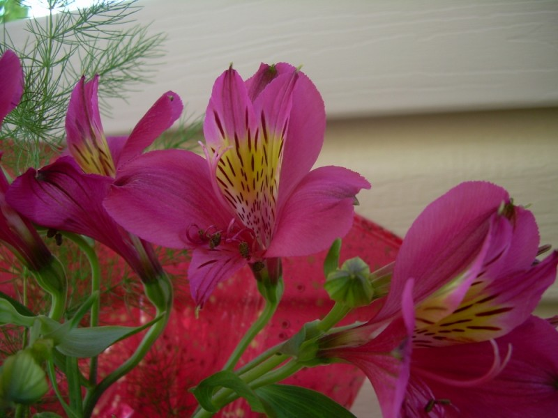 The Flowery Dance