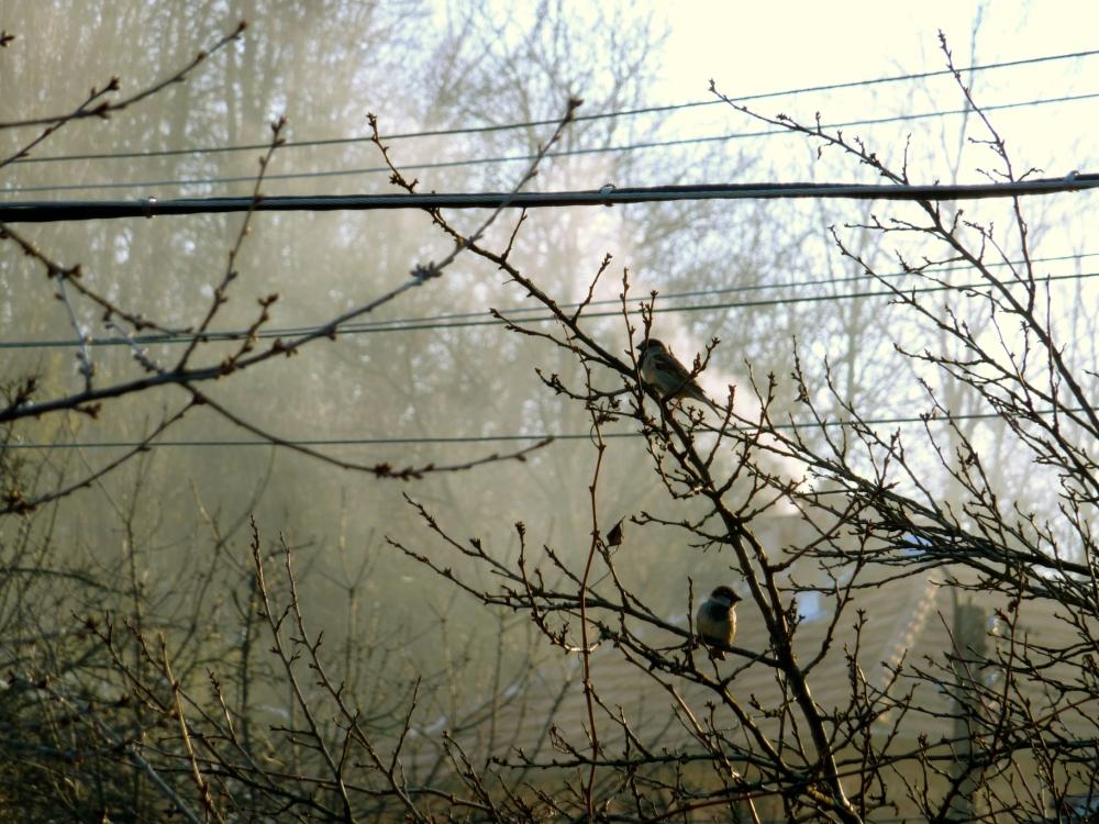 Birds! 2