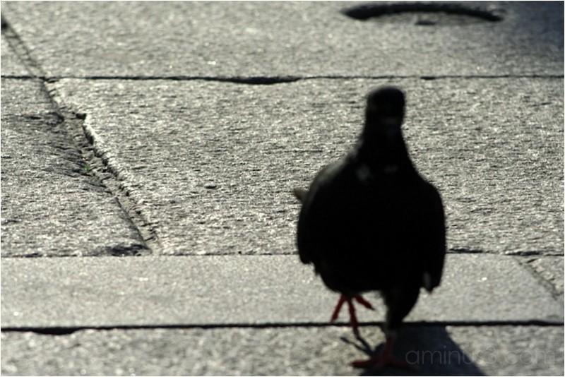 birdie?