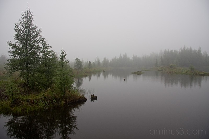 Small swamp in fog