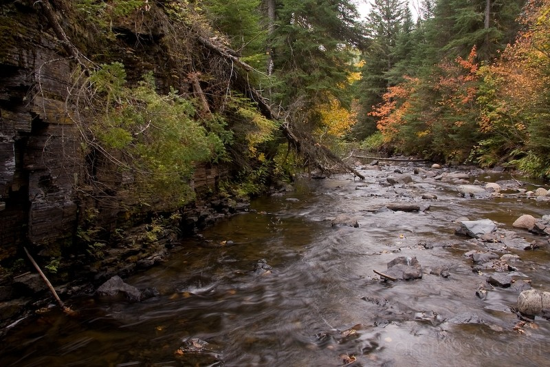 unspoiled, wild river in boreal forest