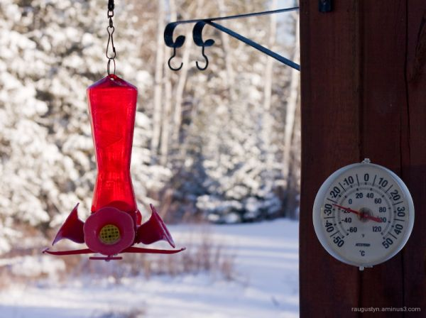 Hummingbird feeder in the witer cold