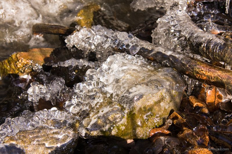 Ice bubbles forming in a forest stream