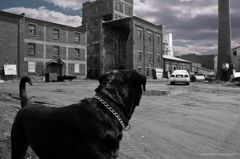 Guarding the ruins of luber mill