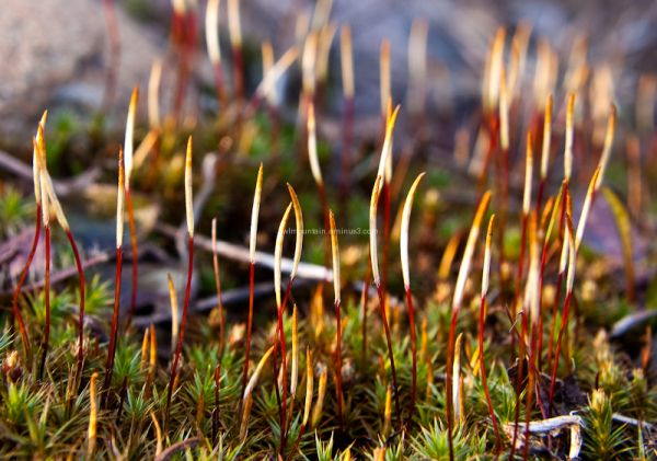 growing moss in the spring