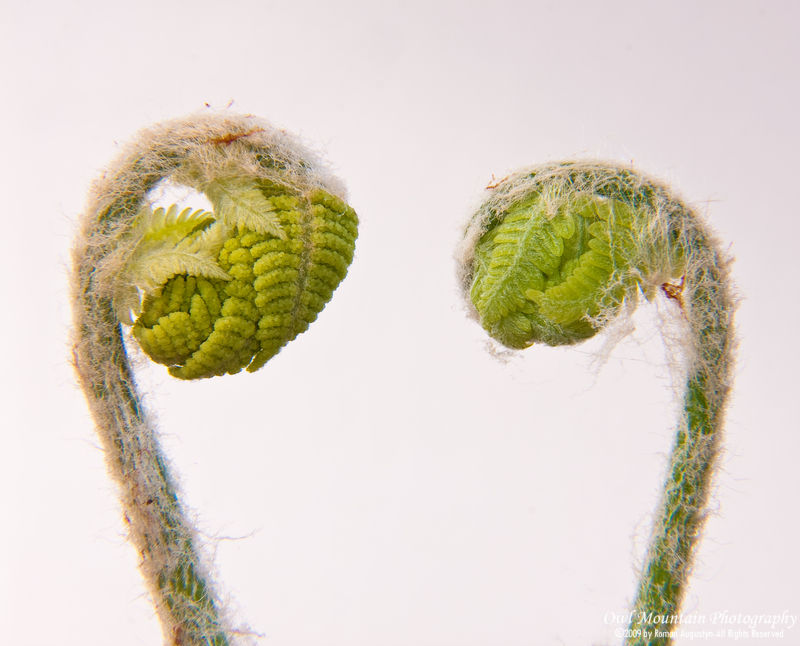Young ferns springing to life