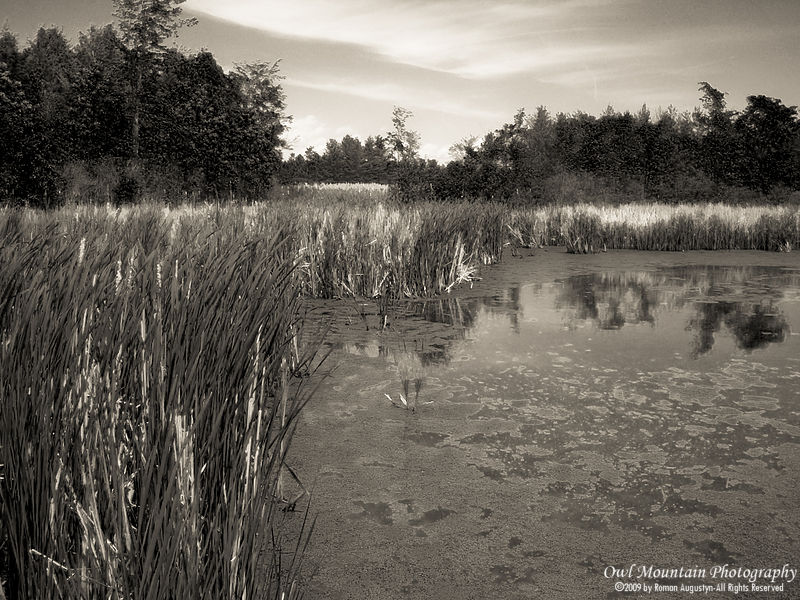 swamp in southern Ontario