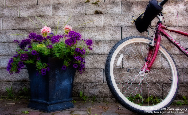 rustic bike left by flower planter