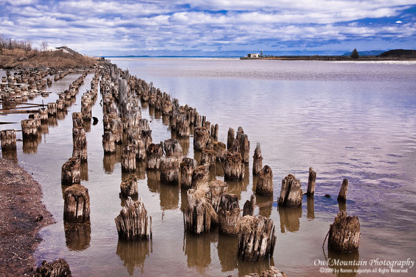Old jetty pilons
