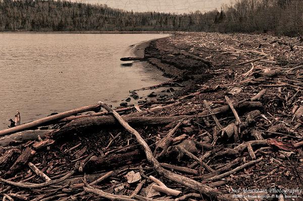 driftwood at shores of lake superior
