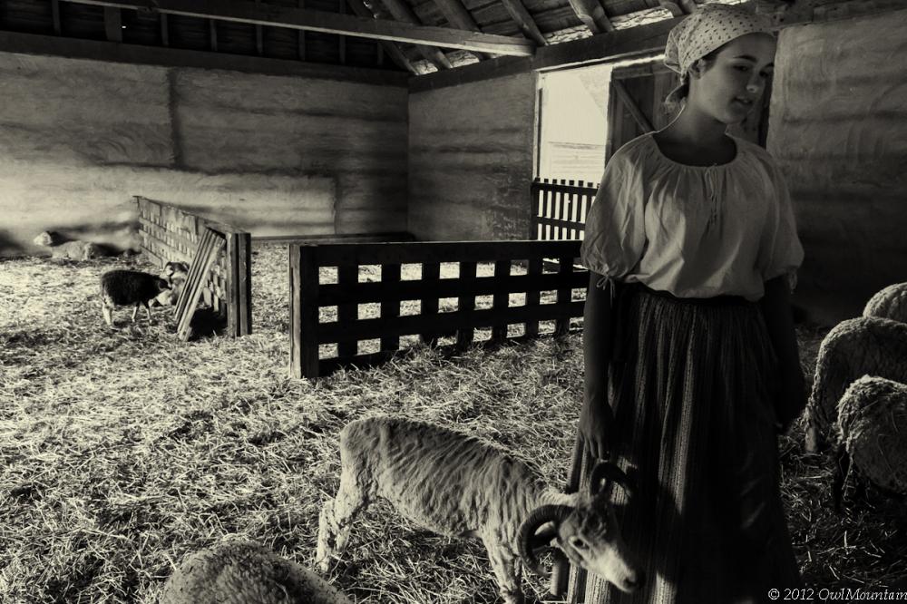 young shepherdess tending to sheep