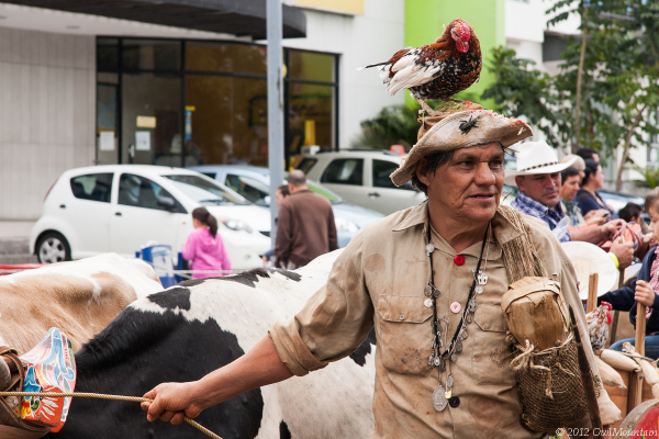 ox cart parade in San Jose Costa Rica