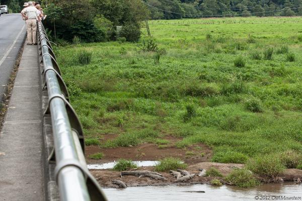 bridge on Tarcoles River in Costa Rica