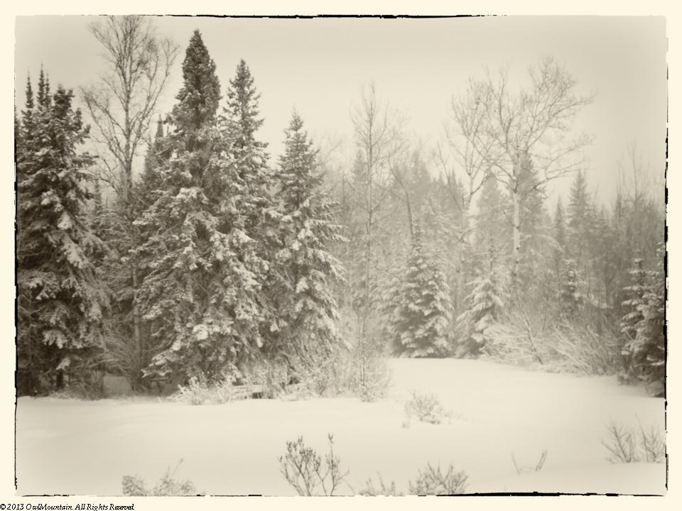 Gardians of Winter