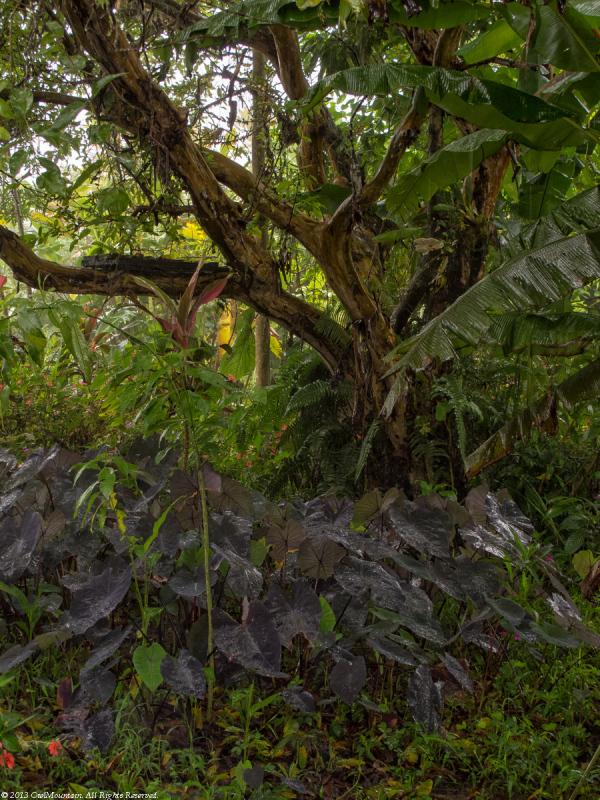 ...tired of winter...jungle dream..
