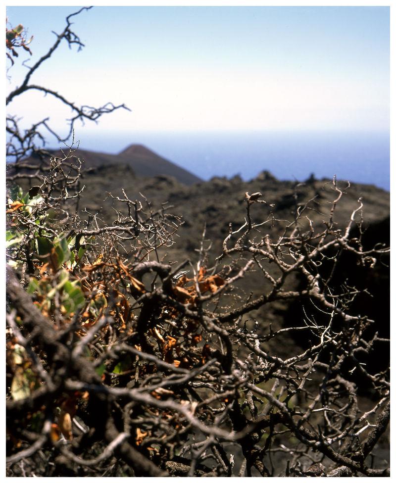 Vegetal life in the Badlands (III)